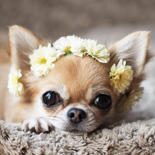 """But mom, I only chewed up da flowers to make this head band."""