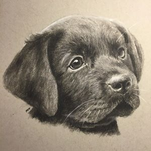 A portrait of a Labrador puppy by artist Andrew Prescott