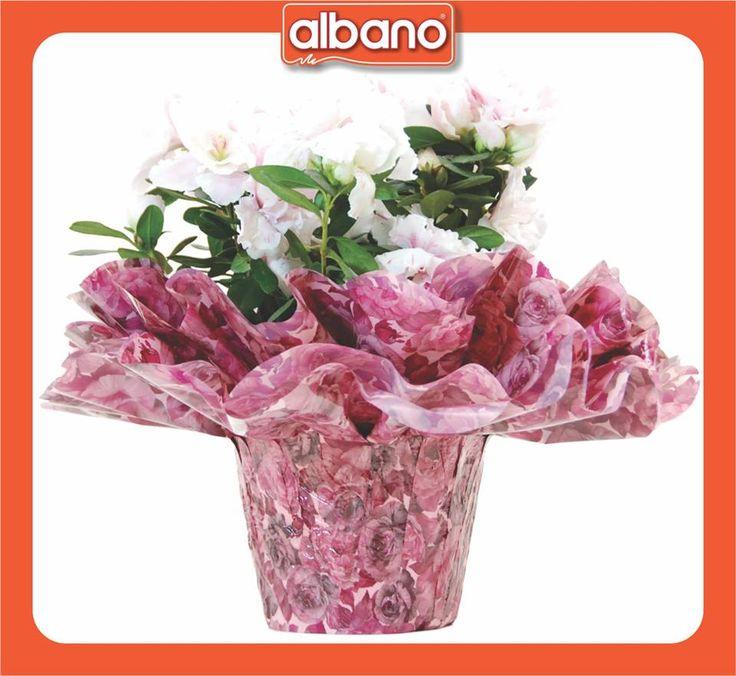 (1) Albano Embalagens