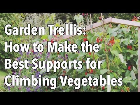 Building Pea and Bean Supports in the Garden | The Old Farmer's Almanac