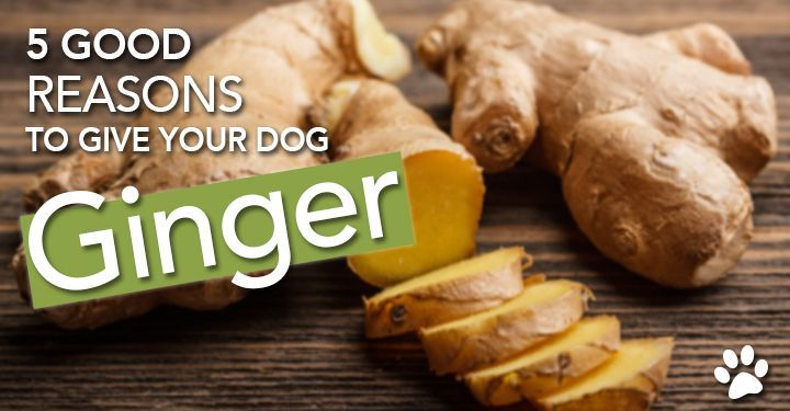 Why and How to Give Your Dog Ginger — Dogs Naturally Magazine | Discusses ginger as a treatment for nausea, bloat, arthritis, cancer, and heartworm; includes dosing guidelines