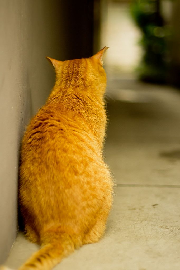猫の背中 | Flickr - Photo Sharing!