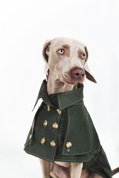 4. Hund: Bekleidung - Nach Maß:Hunde Trenchmantel Regenjacke Wasserdicht - ein Designerstück von happystaffyme bei DaWanda