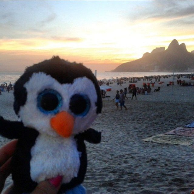 Mr. Cool admiring the beautiful #sunset at the #beach of #Ipanema. #brazil #riodejaneiro #travel #penguin #cutestuff