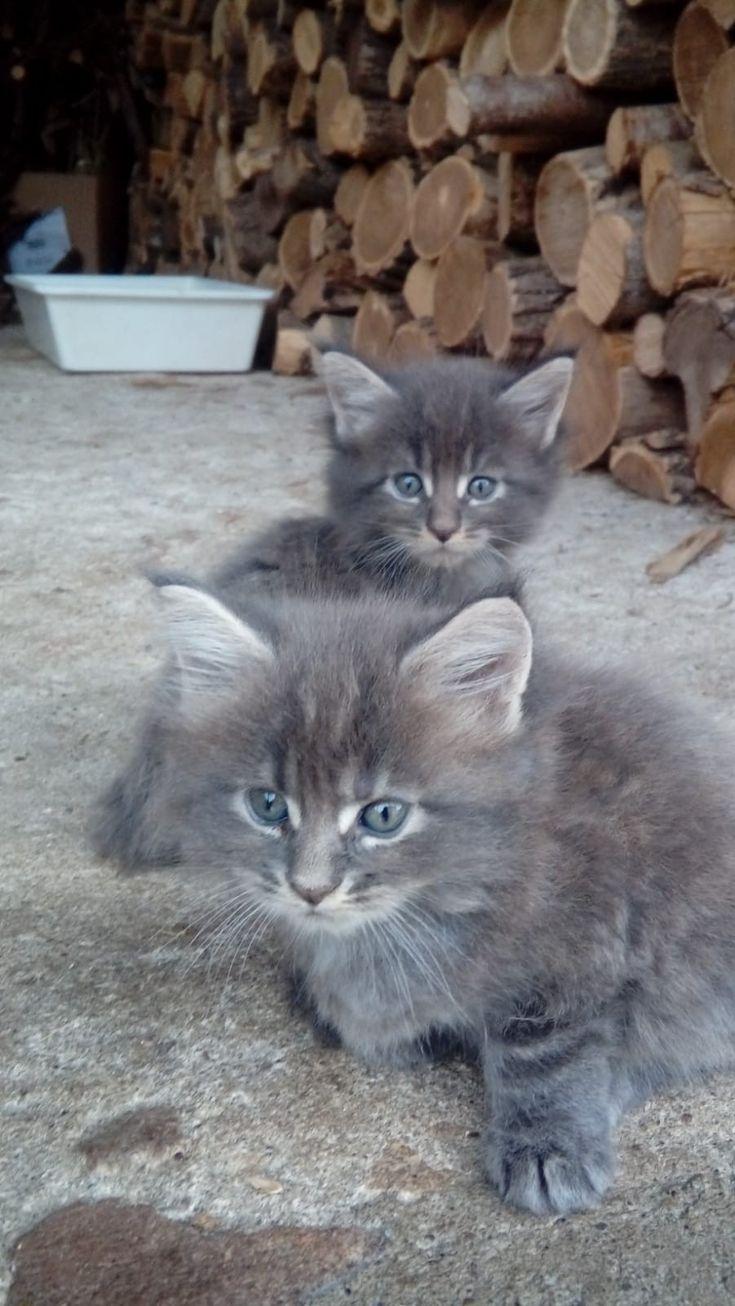 Pin By Brenda Mezik On Cat Kittens Cats Animals