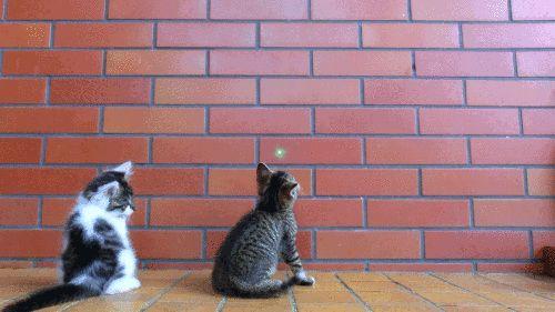 Cat heroics :)