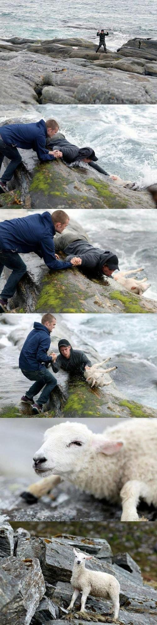 Two Norwegian men rescuing a sheep from the ocean :)