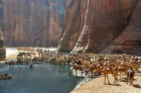 Wadi elgemal or camels valley  Marsa alam Red sea  Egypt