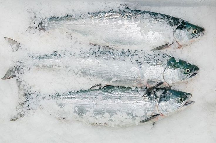 May is here and Copper River salmon season is just around the corner! Bring on those bright + beautiful wild salmon.  by @kimberleyhasselbrink // #knowyourfisherman #copperriversalmon