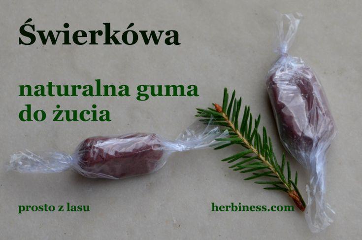 Guma świerkówa prosto z lasu - czyści zęby i likwiduje bakterie. Tradycyjne żuwaczki gruzińskie, zrób sam i dowiedz się, dlaczego warto.