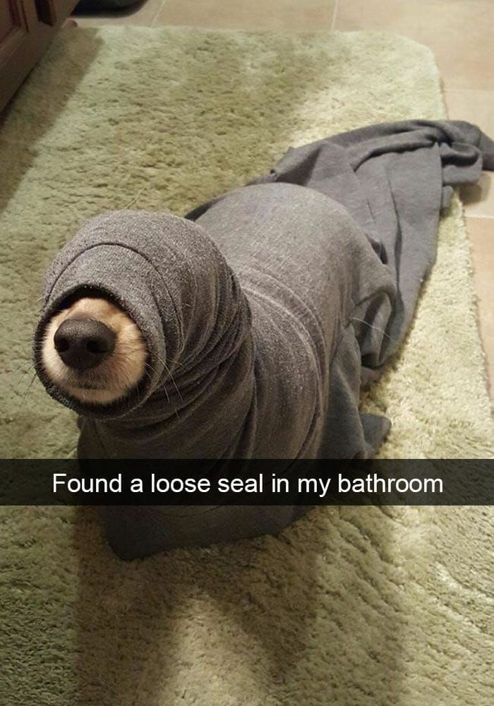 25+ Hilarious Dog Snapchats who do not laugh
