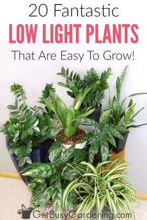 There S No Such Thing As Plants That Grow In The Dark But Are Plenty Of Can Indoors With Little Light