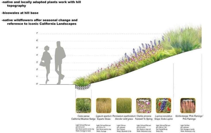 Meadow Planting - Design - Santa Monica Civic Center Parks