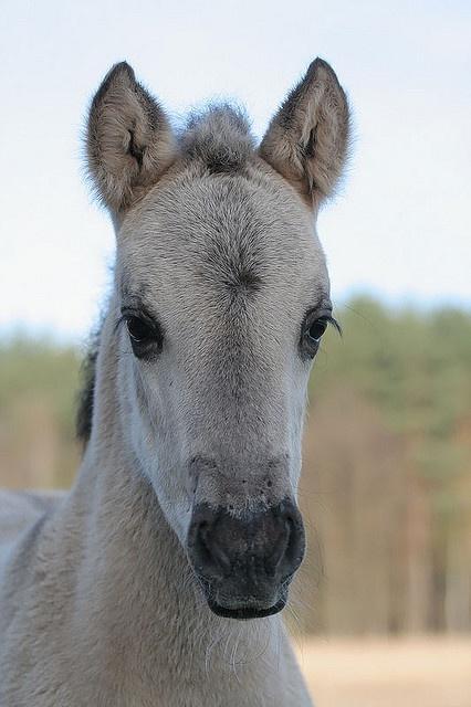 Polish Pony, Roztocze National Park, Poland by Mariusz Cieszewski,