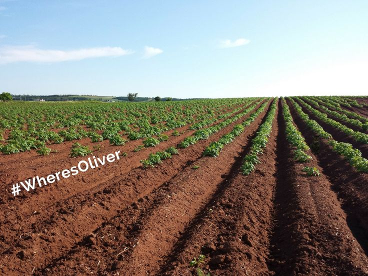 """""""Growing potatoes on Prince Edward Island is much more than just an industry…it's a way of life!"""" Potato farms pattern the landscape in PEI, with more than 200 farms across the 224 km island. Oliver has his eye on becoming the next great potato grower. Find out more at: http://www.peipotato.org/why-pei-potatoes"""