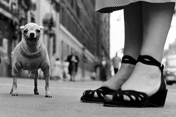 Insider Look at the Work of Famous Street Photographers: New Documentary – PictureCorrect