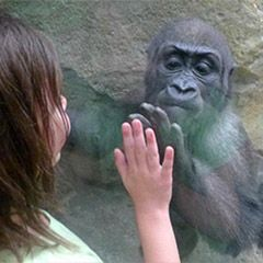 Plan a Visit to Franklin Park Zoo in Boston, MA | Zoo New England $17.95pp, $11.95 Carter, Evie Free