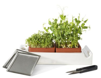 Micro greens and seed sprouters. Eat healthy with this unique growing system.  Contact me at info@delamarieinteriors.com to find out more or to purchase Cult Design Sweden items. www.delamarieinteriors.com