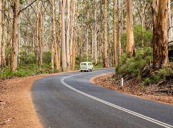 IMB-0006161 © WestPix Boranup Forest, South West WA Photo by Rosaria Imbroglia