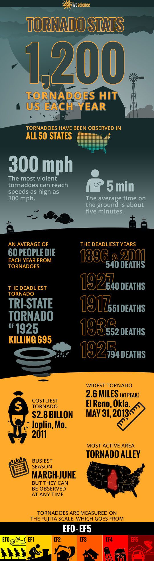 Twisted Tornado Facts to Know