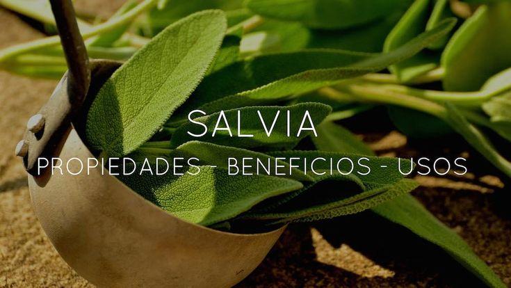 La infusión de Salvia nos puede ayudar con la indigestión y la acidez de estómago, podemos usarla como enjuague bucal, para luchar contra la sudoración excesiva, además puede aliviar inflamaciones leves. Descubre todo lo que nos puede ofrecer esta planta: