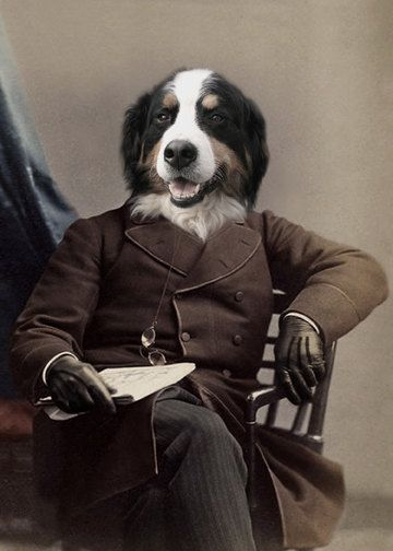Bern, Bernese Mountain Dog Print, Anthropomorphic, Altered Photo, Whimsical Dog, Quirky Animal Art, Unique Wall Decor, Gift for a Dog Lover