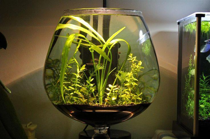 Schritt für Schritt Aufbau von einem Mini-Scape u2014 2L Stonejungle - deko fur aquarium selber machen
