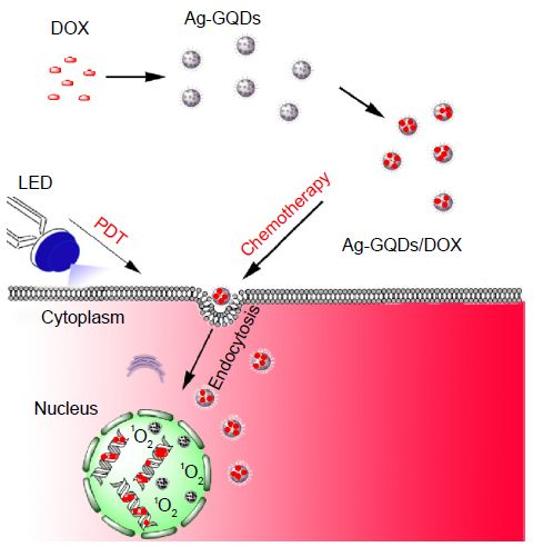 Figure 1 Schematic illustrating the preparation of Ag-GQDs/DOX nanoconjugates and...