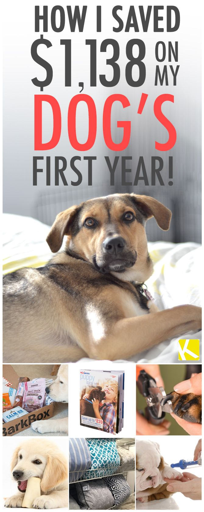 How I Saved $1,138 on My Dog's First Year!