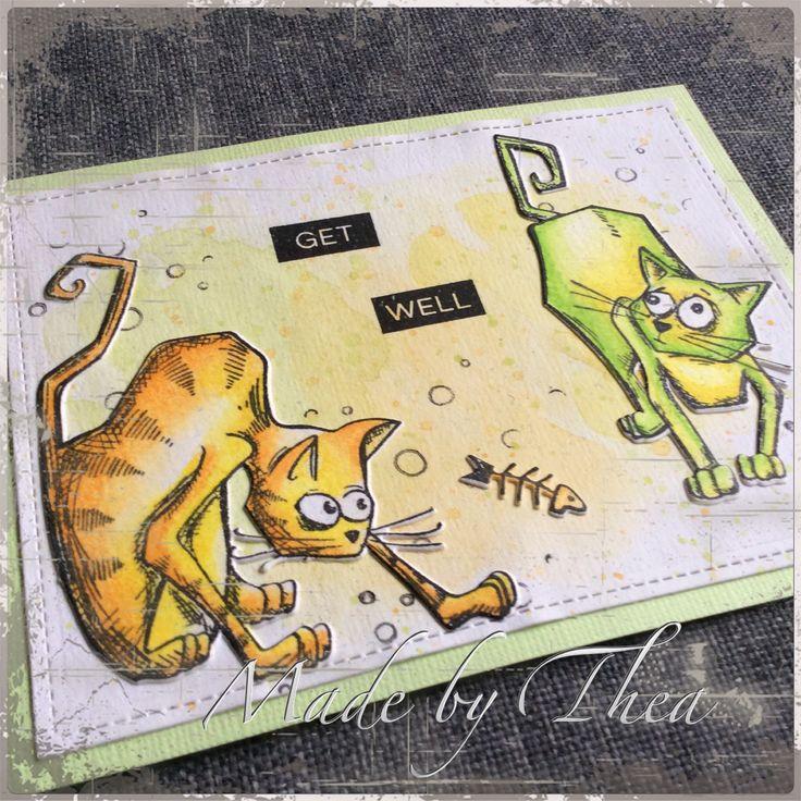 Crazy cats....