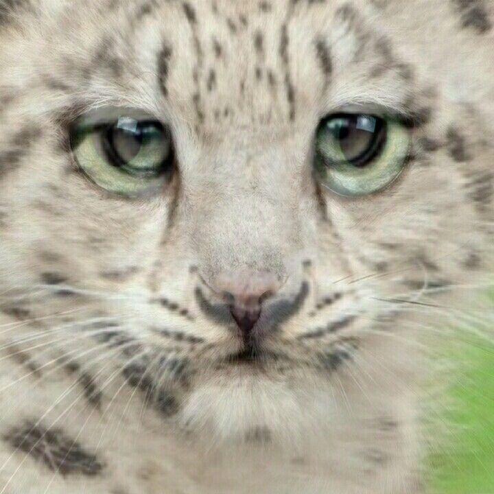 Awsome lepard and cat in one