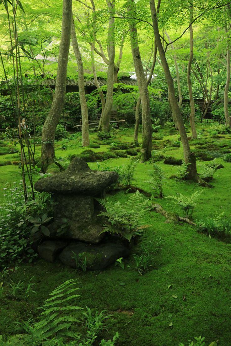 「新緑の庭」by植原 誠 Giouji Temple Kyoto,japan