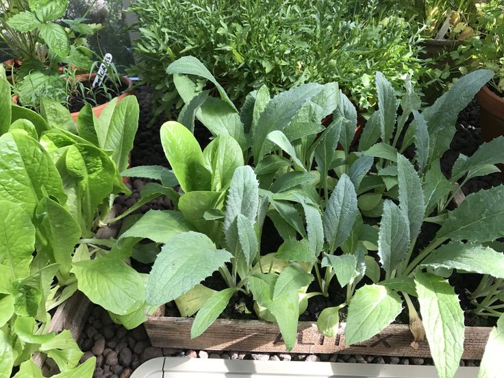 What to plant when- 23rd June.  »  My Productive Backyard » Learn to Grow your Own Food at Home