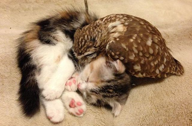 Kitten and owl - friends for ever