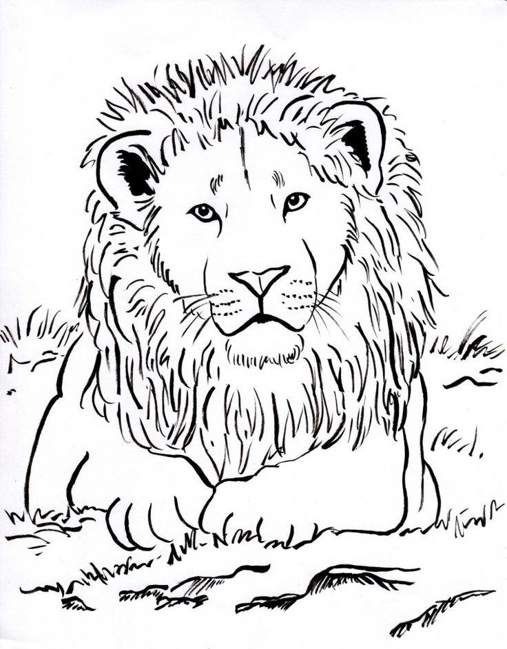 Week 3 Upside Down Lots Of Animal Coloring Pages Lion Page 001