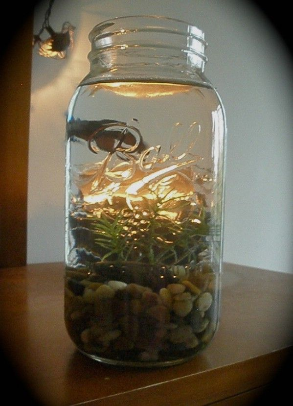 106 best images about mason jars on pinterest for Fish in a jar
