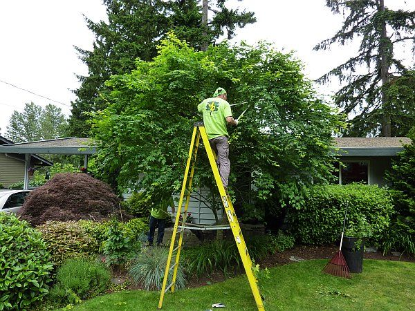 Treezy are a qualified professional tree care company that specialise in tree care, tree pruning, tree cutting, tree trimming. #treecutting #treeremoval