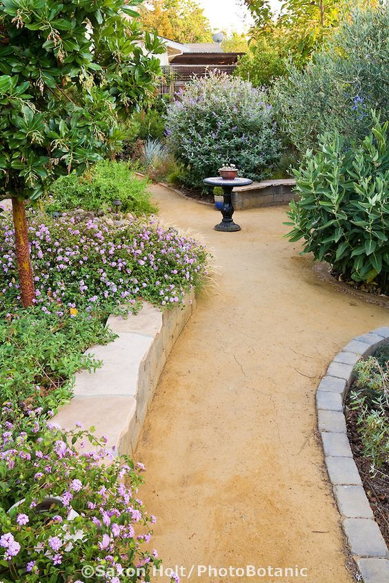 'Goldfines' decomposed granite crushed rock path in California backyard drought tolerant garden with Arbutus 'Marina':
