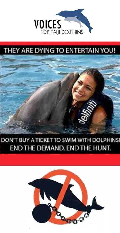 @CarnivalCruise @CoveMovie_OPS @RichardOBarry Don't sell swimming with dolphins excursions. #dontswimwithdolphins