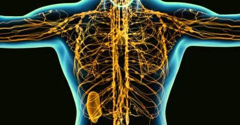 Sintomi e Rimedi per il Sistema Linfatico pigro e intasato
