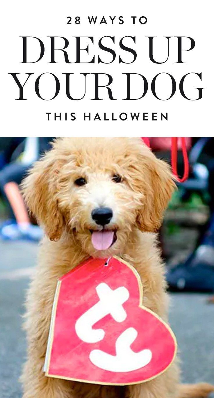 Here are 28 dog halloween costume ideas for your trick-or-treating (fine, Instagramming) pleasure.