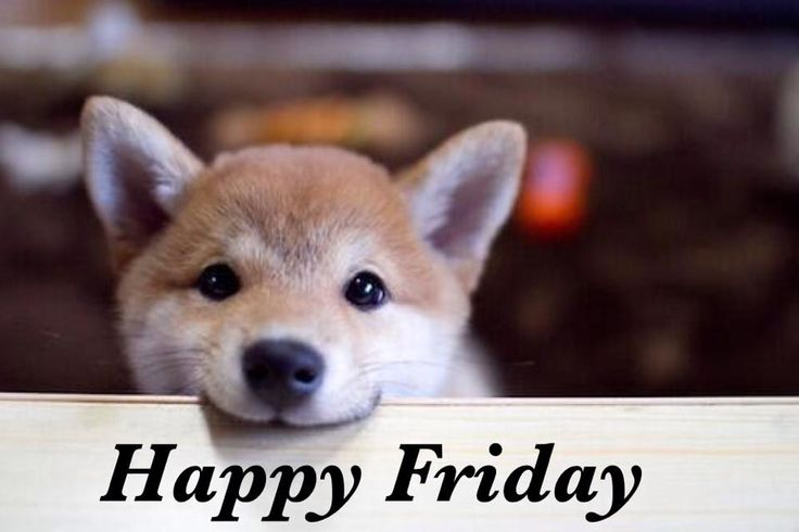109 best images about Happy Friday on Pinterest