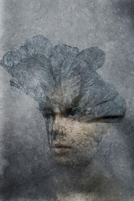 Päivi Hintsanen: A Dream That Could Not Be, 2012