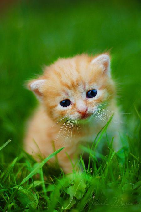 Cute Smallest Kitten in the World | Cutest Little Kittens in the World (5 photos)