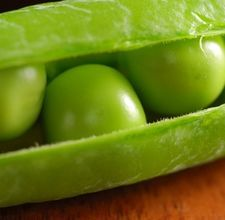 How to Grow Soy Beans Indoors
