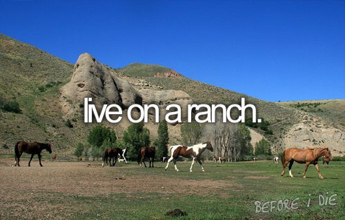 I hope to inherit my parents land someday and turn it into ranch/farm... there are already cows out there anyway...
