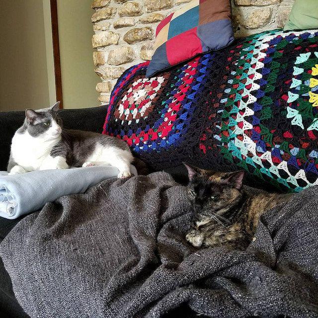 Review Cat spray, Cat pee, Litter box