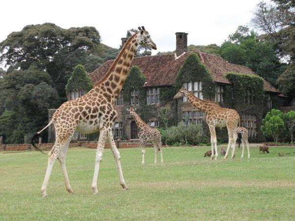 Giraffe Center - outskirts of Nairobi, Kenya