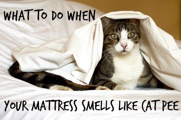 My Sweat Smells Like Cat Urine