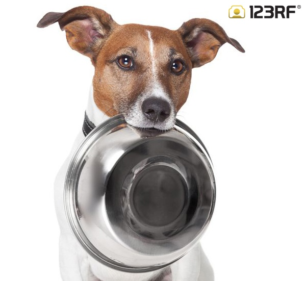 Give this photo a caption and share it!   #123rf #dogs #animals